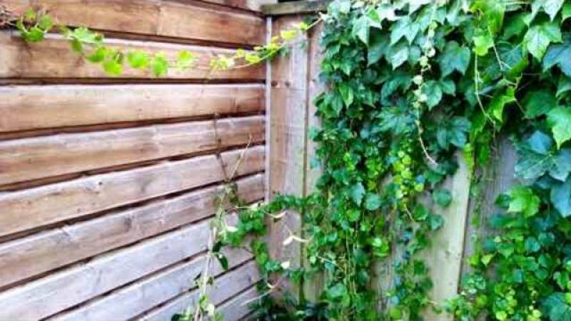 Styxhexenhammer666 DUTCH garden Update 842021