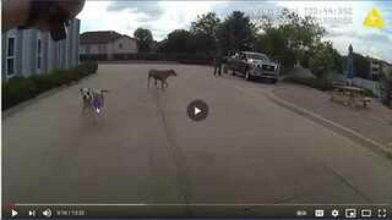Officer Matthew Grashorn of Loveland Colorado Shoots Playful Dog - Police Earning The Hate